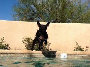 Flea And Tick Prevention In El Paso Mesa Veterinary Clinic Paws